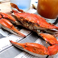 Seafood Cuisine & Recipes